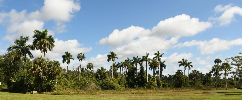 Royal Palm Hammock